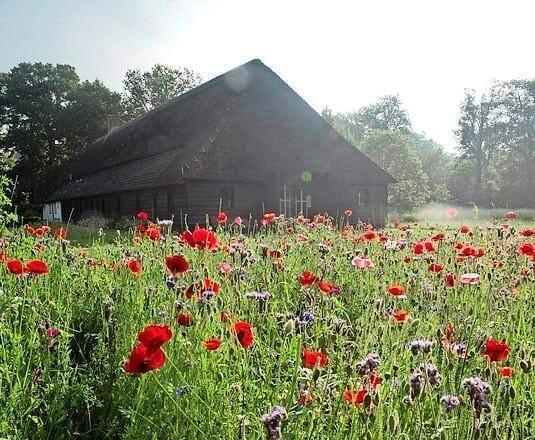 <p>Klaprozen en andere wilde bloemen rondom de boerderij en het atelier van Mulders.</p>